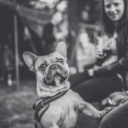Neugieriger und verfressener Hund