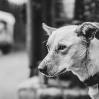 Hund Wien